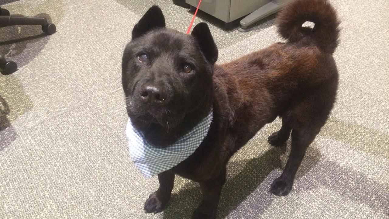 Our Pet of the Week on Tuesday, Dec. 16, is a 10-year-old male Chow Chow mix named Duke. Please give him a good home!