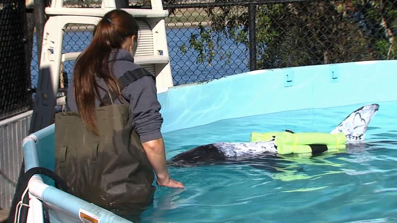 A 1-year-old dolphin died at SeaWorld San Diego Tuesday, Dec. 16, 2014 after being rescued by Los Angeles County Lifeguards in San Pedro.