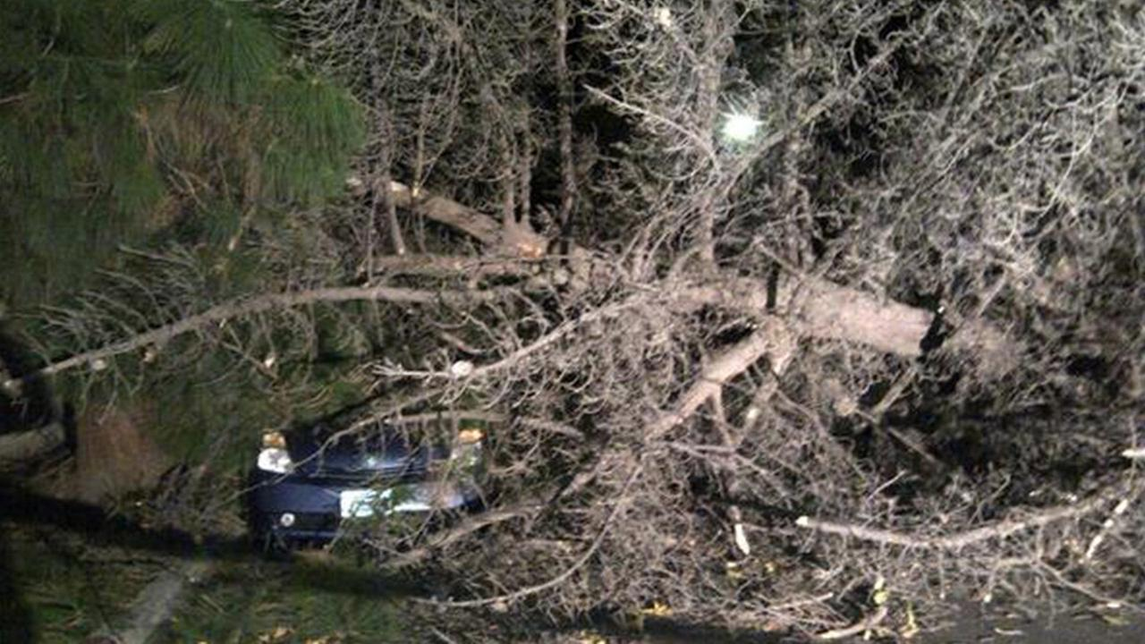 A tree in Chatsworth falls on a parked car on Sunday, Dec. 21, 2014.