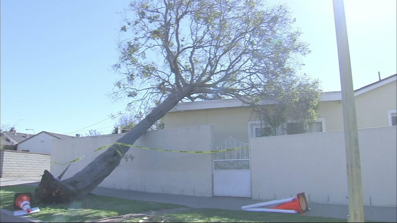 A high-wind warning was in effect for parts of Southern California Christmas Eve into Christmas Day. The windy weather took down trees and caused power outages.