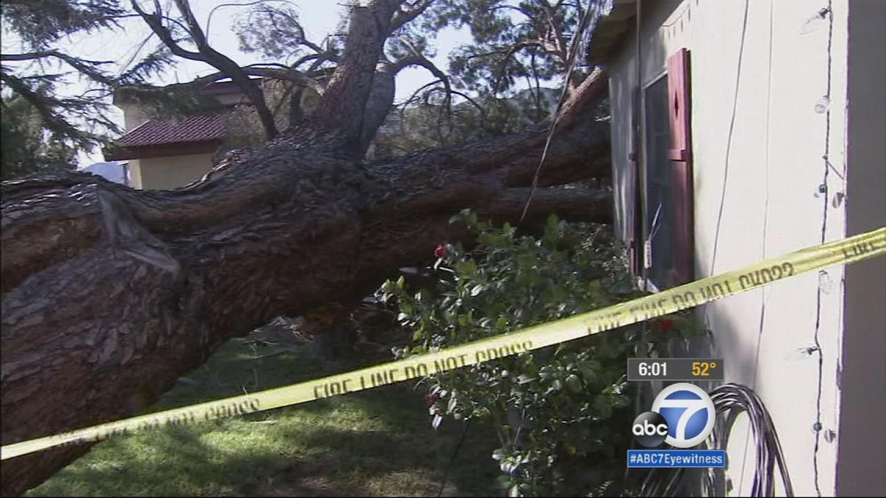 Strong winds toppled over a giant pine tree in La Crescenta, sending it straight down on a home on Tuesday, Dec. 30, 2014.