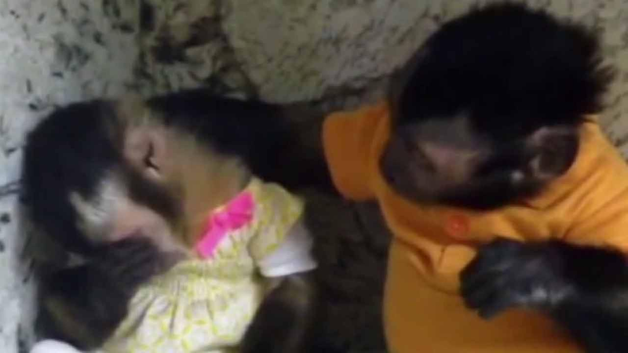 When youre feeling down, theres nothing like having a good friend offering comfort. Thats what Miami zookeepers saw these two little monkeys doing!
