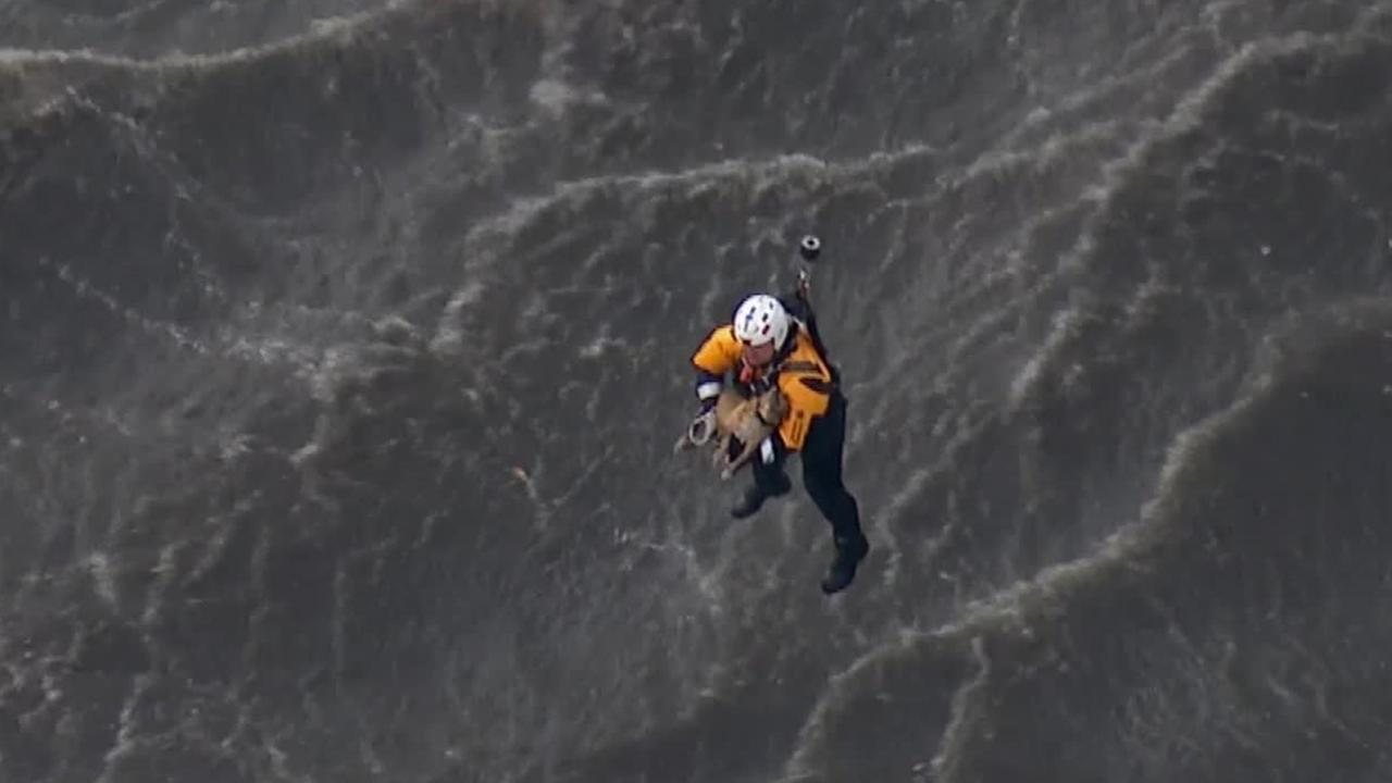 A firefighter rescues a dog from the Los Angeles River in Burbank on Friday, Jan. 30, 2014.