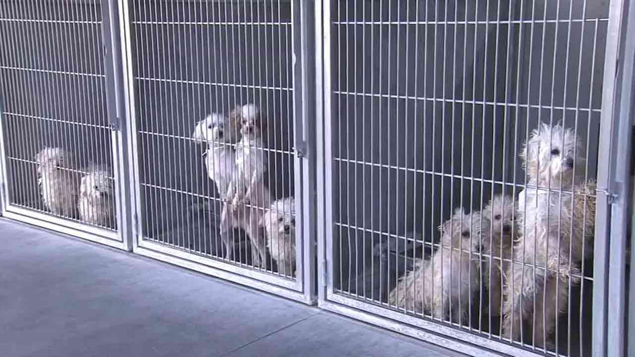 San Bernardino County Animal Care and Control officers rescued 191 dogs from an animal hoarder last week.