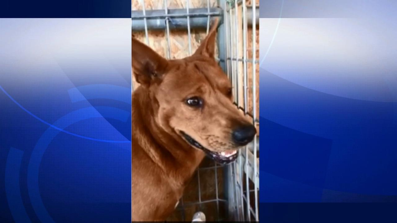 Walter, the dog who was found trapped in a nailed shut dog house in South Los Angeles, is on his way to recovery.