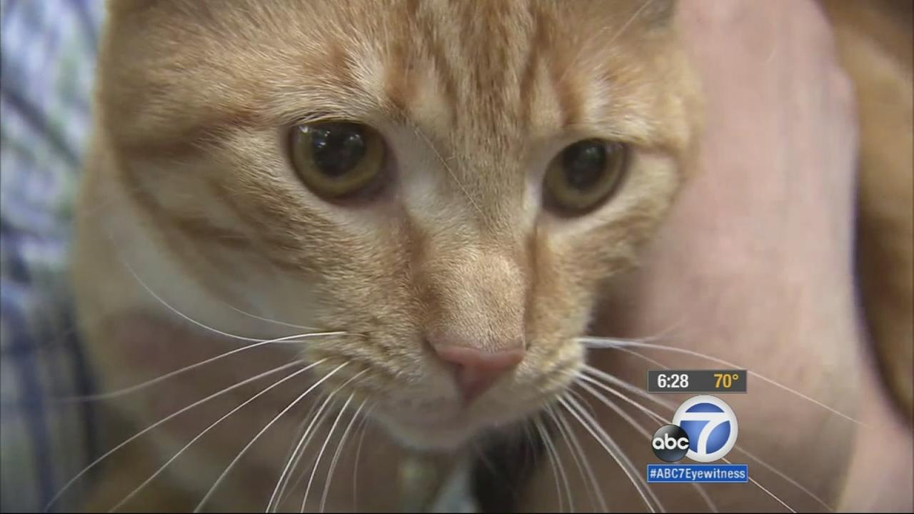 Kevin the cat went missing from his South Carolina home two years ago. He was found in Riverside County after hitching a ride on a U-Haul trailer.