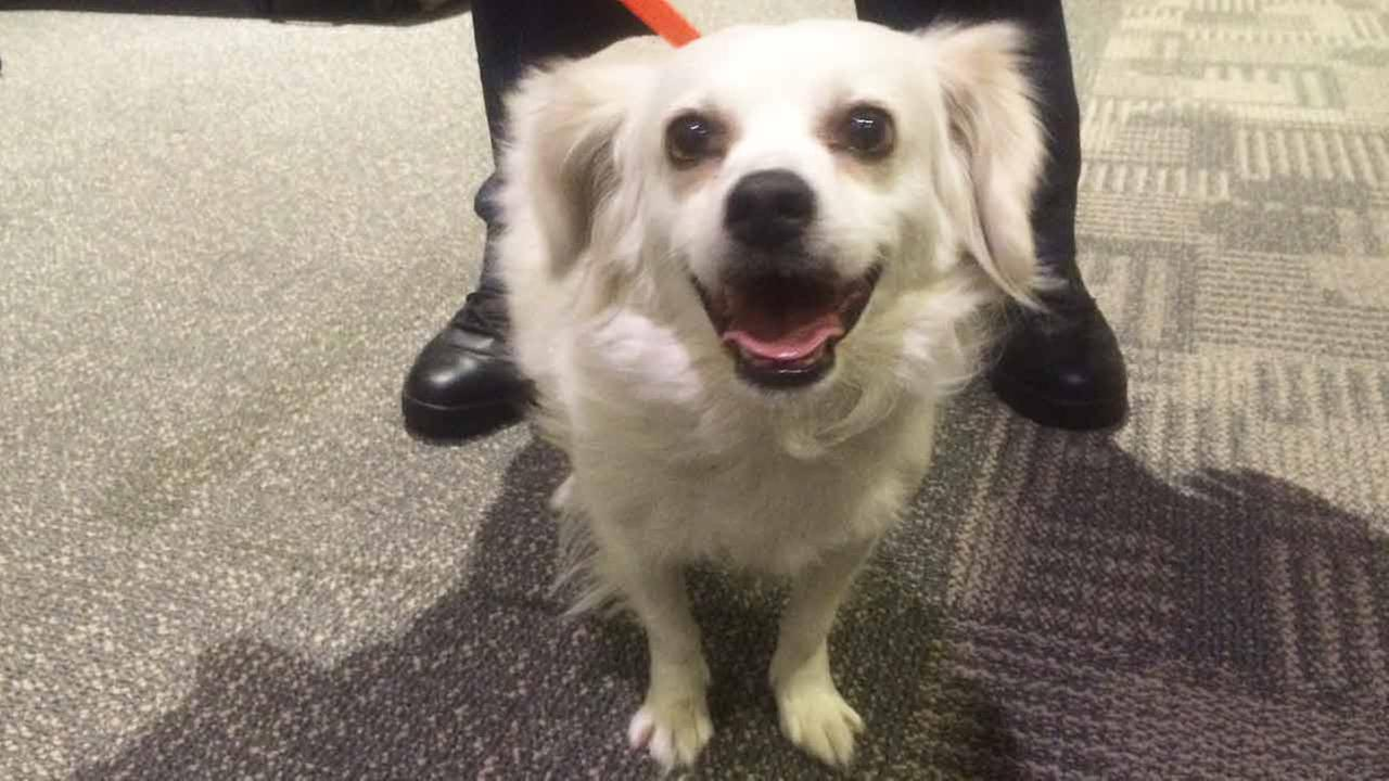 Our Pet of the Week on Tuesday, March 31, is a 3-year-old male Cocker Spaniel mix named Marley. Please give him a good home!