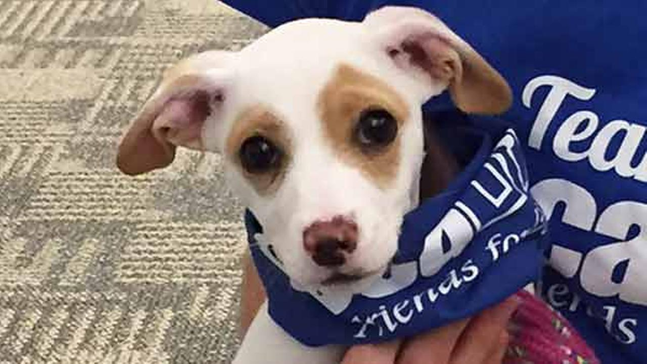 Our Pet of the Week on Thursday, April 2, is a 3-month-old male terrier mix named Powder. Please give him a good home!
