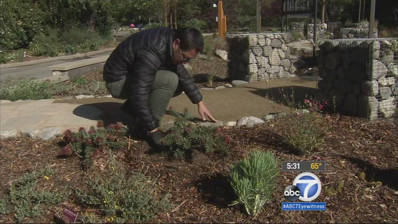 Descanso Garden in La Canada Flintridge is trying to inspire Angelenos to be water-wise when it comes to their lawns amid Californias epic drought.