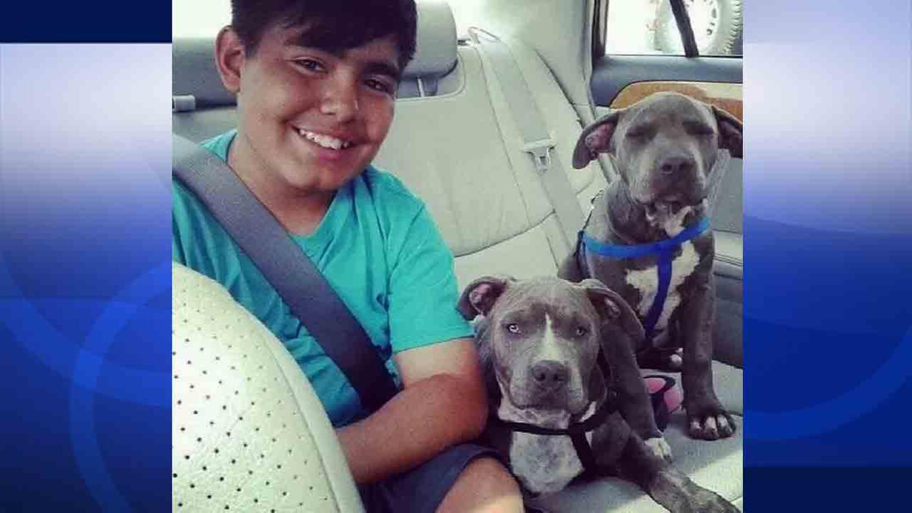 David Vasquez, 11, is seen with his puppies Dodger and Buddha in this undated file photo.