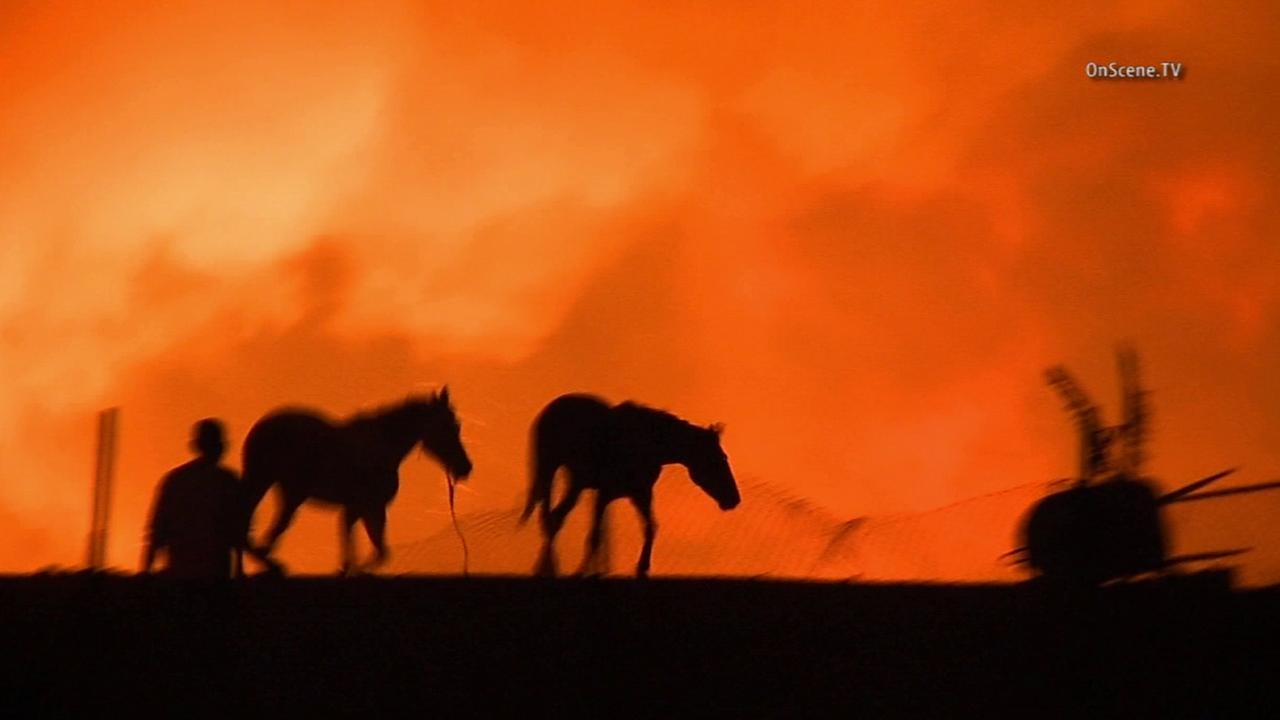 Many residents rushed to evacuate their horses after a fire erupted near the Prado Dam in San Bernardino County Saturday, April 18, 2015.