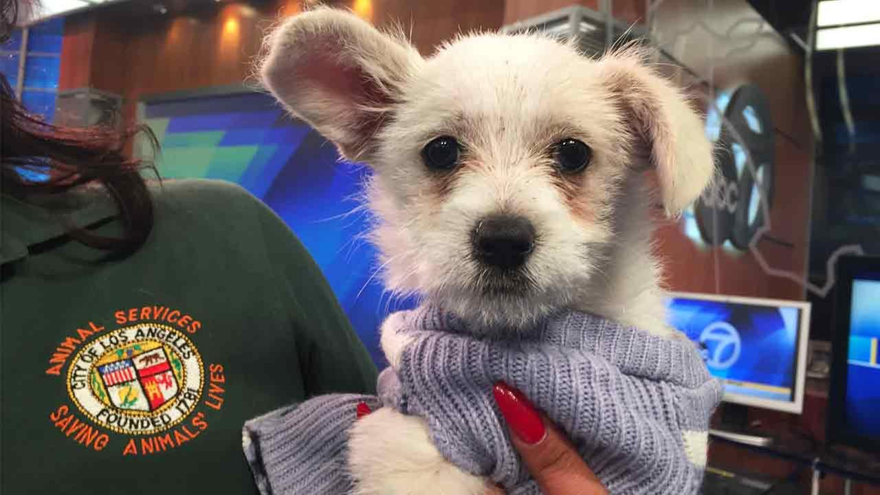 Our Pet of the Week on Tuesday, April 21, is a 3-month-old female terrier mix named Joy. Please give her a good home!
