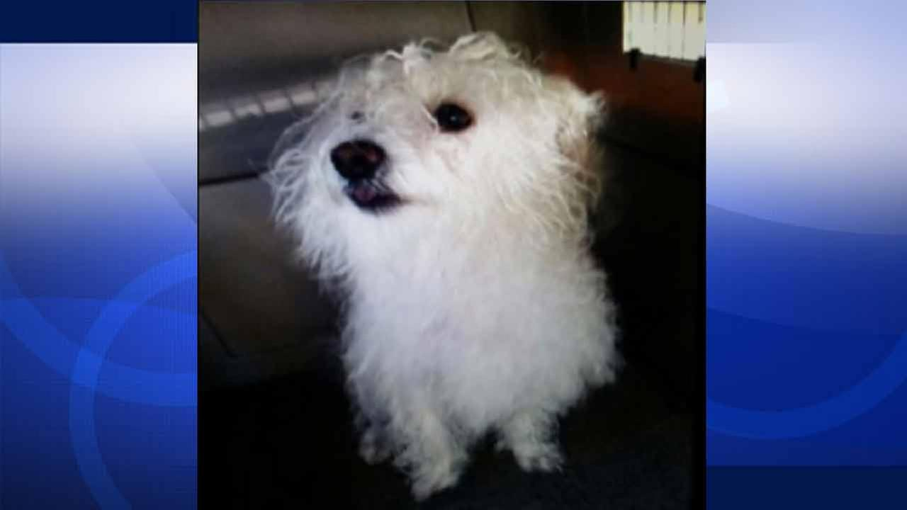 Fannie the dog was stolen from an Echo Park man by two women pretending to be LAPD Animal Cruelty officers on Tuesday, April 14, 2015.