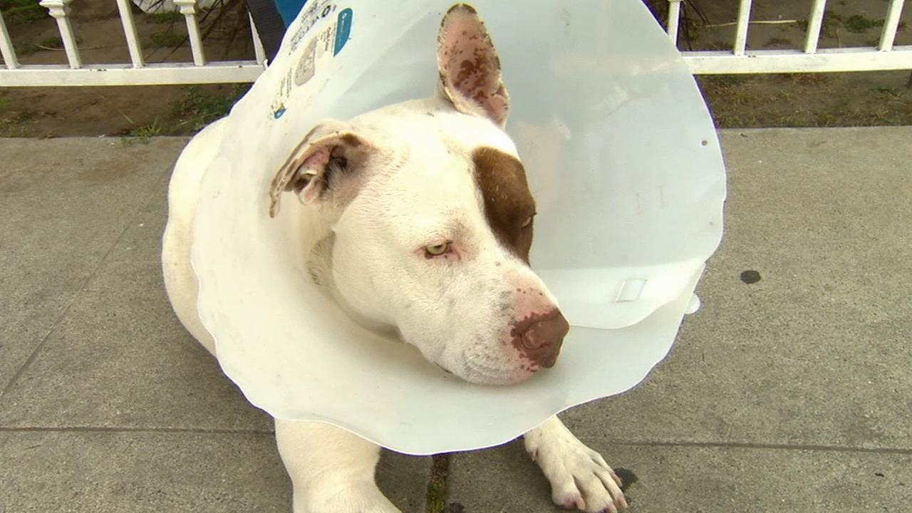 Shaggy was abandoned by his owners when they were evicted from their home in Long Beach about two months ago.