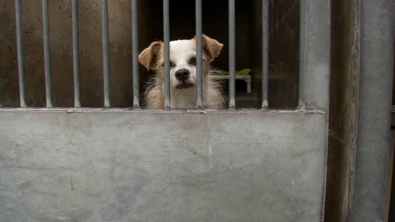 A dog is shown in a shelter managed by Orange County Animal Care.