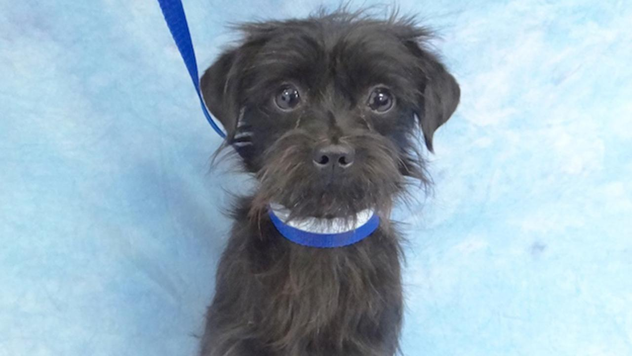 Our Pet of the Week on Thursday is an 11-month-old Terrier mix named Jackson. Please give him a good home!