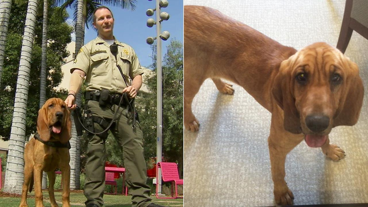 The Los Angeles County Sheriffs Department has a new tracking dog. The 6-month-old bloodhound is currently in training and needs a name.