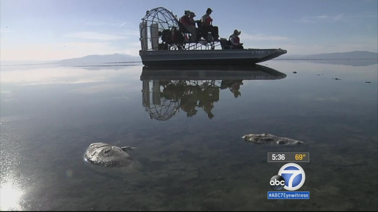 An air of decline and strange beauty permeates the Salton Sea: The lake is shrinking - and on the verge of getting much smaller as more water goes to coastal cities.