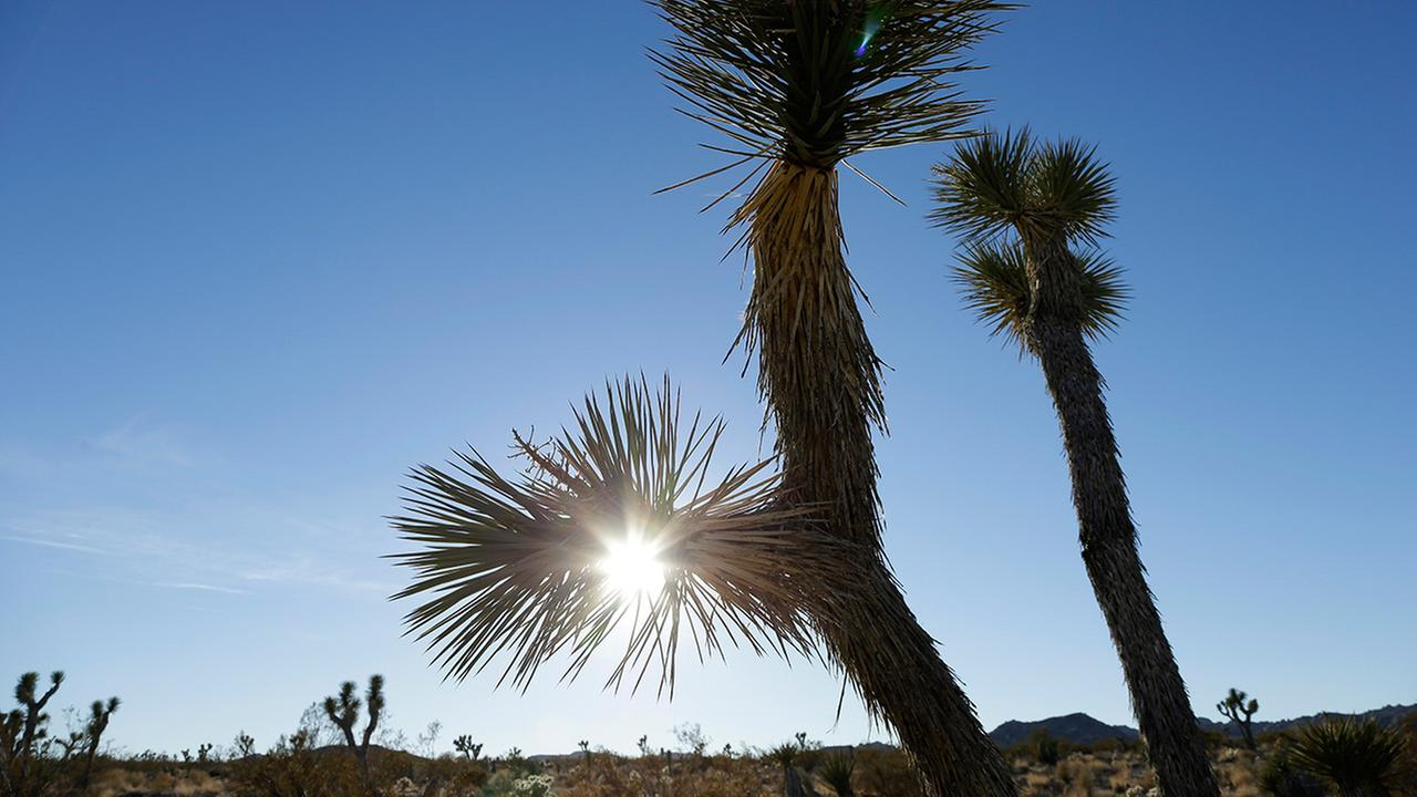 The sun sets behind joshua trees in Joshua Tree National Park Wednesday, Jan. 16, 2013, in Twentynine Palms, Calif.