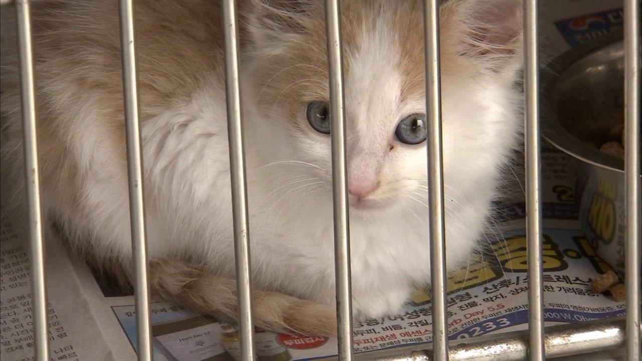 A cat is shown at the Downey Animal Care Center.