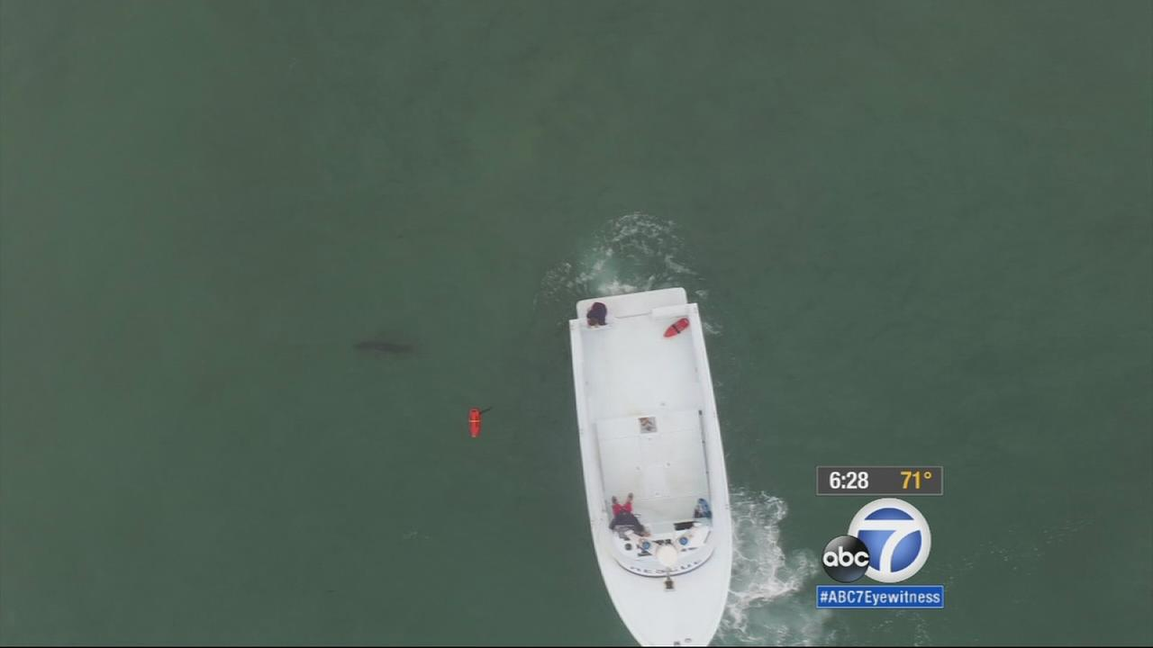 Lifeguards are using a $1,400 drone to patrol the waters off Seal Beach and keep beachgoers away from sharks.