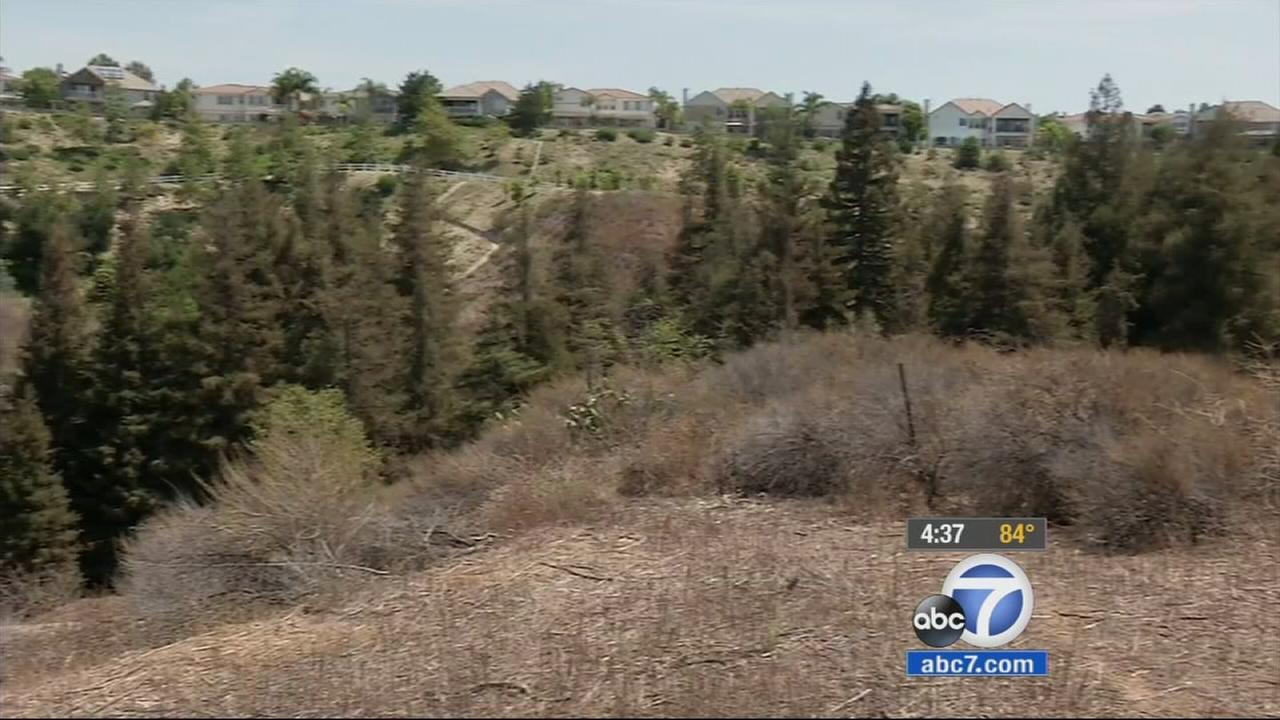 Hundreds of redwoods fill three acres of Carbon Canyon Regional Park in Brea.