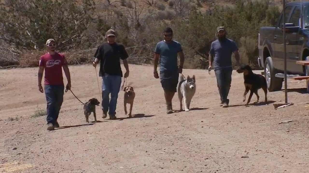 Local veterans with post-traumatic stress disorder are getting help dealing with their illness by bonding with dogs and teaching the four-legged animals to herd sheep.