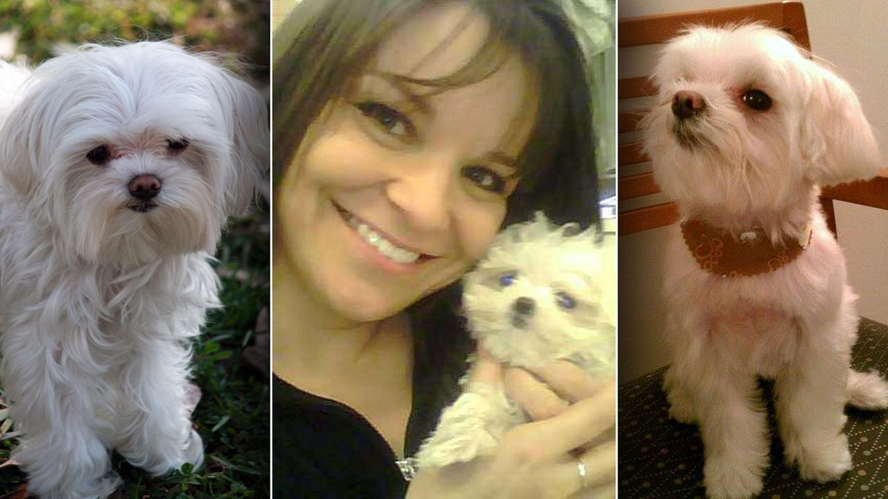 Dognapping Thieves Stealing Dogs To Sell For Profit