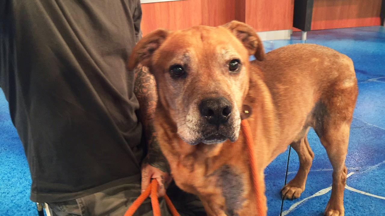 Our Pet of the Week on Tuesday, July 21, is a 10-year-old Rottweiler mix named Deuce.