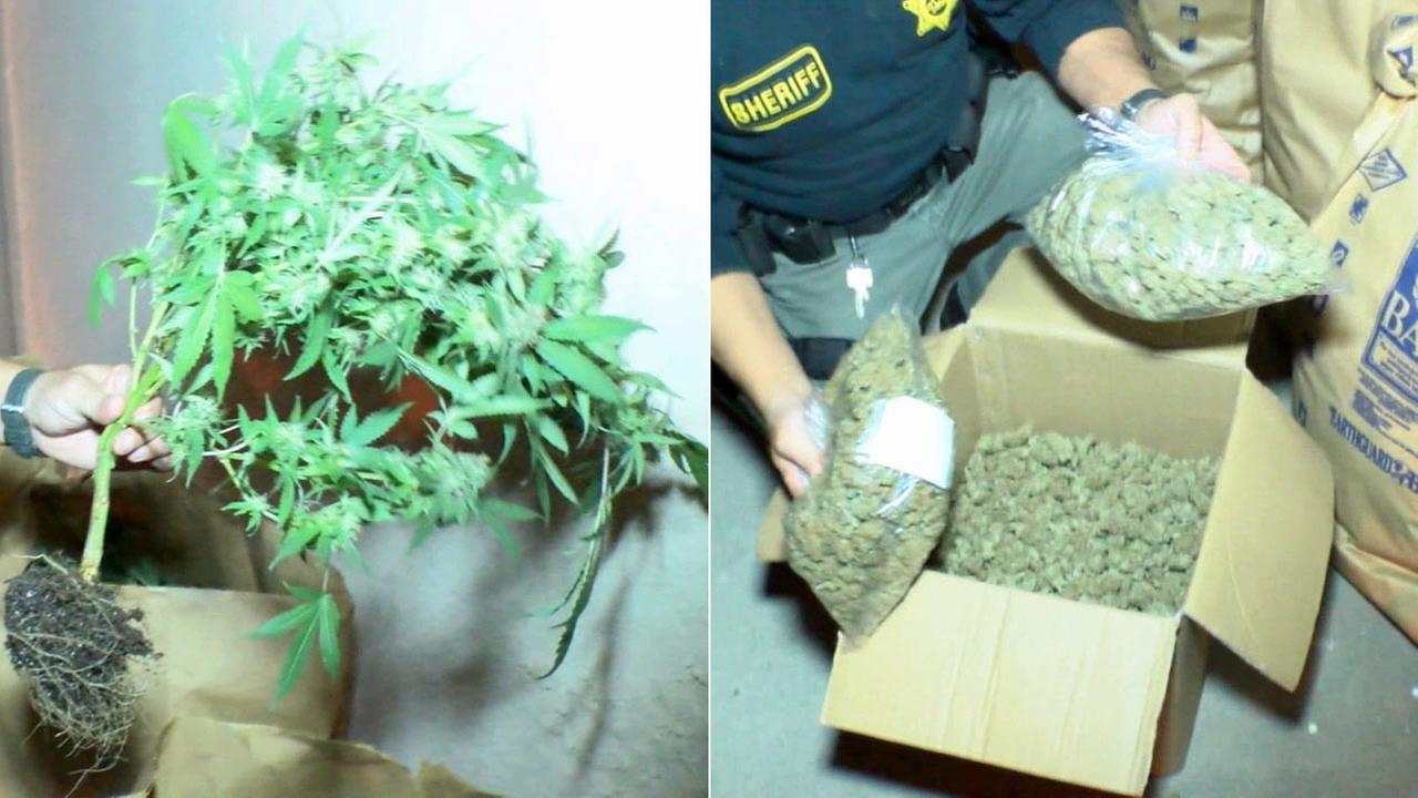 At least six people were arrested and one child was taken into protective custody following pot busts at two homes in Rowland Heights on Tuesday, July 21, 2015.