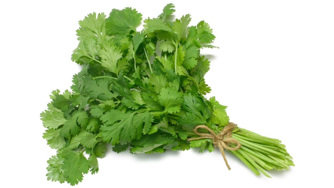 Cilantro is shown in this undated file photo.