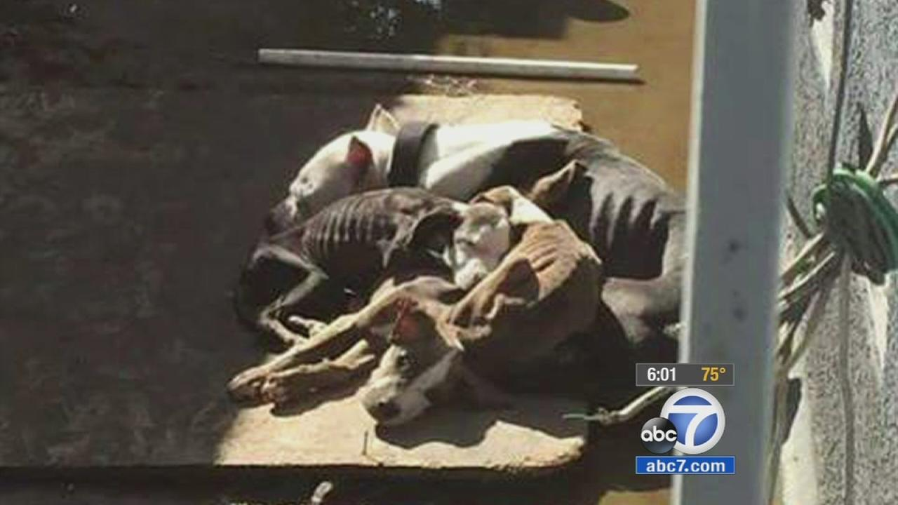 Photo of emaciated dogs in Pico Rivera sparks outrage
