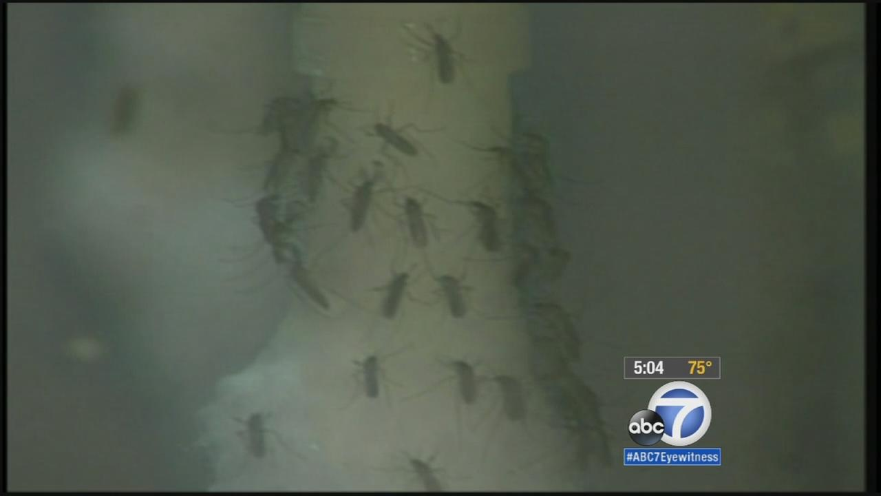 Health officials are urging Riverside County residents to take precautions as it now has the highest number of people infected by the West Nile virus in the state this year.