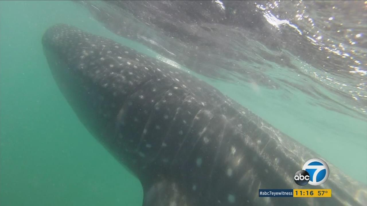 El Nino effects: Animals rarely seen in Southern California start showing up