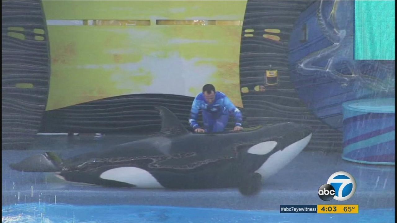 SeaWorld announced Monday that the killer whale shows at its San Diego park will be phased out next year and replaced with a conservation-oriented orca exhibit beginning in 2017.