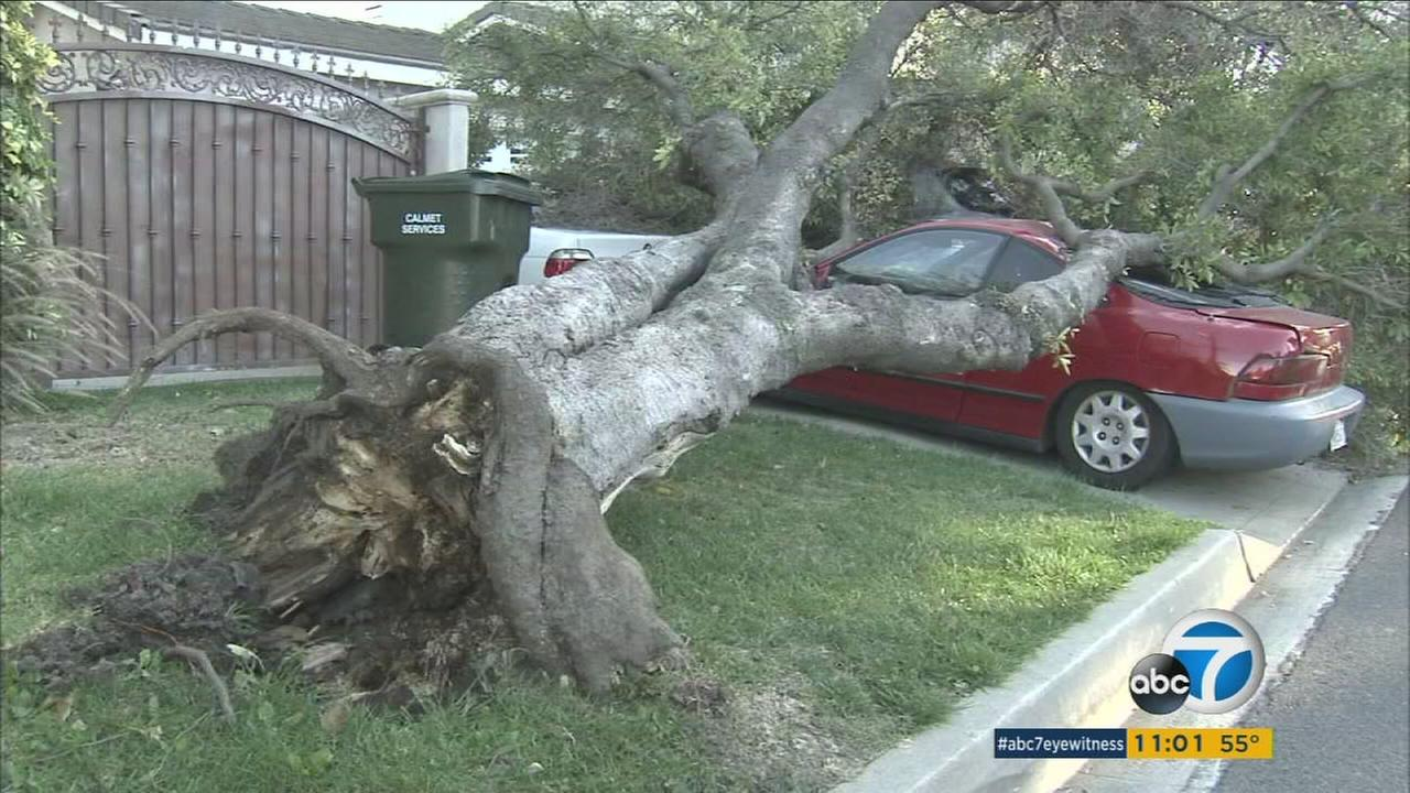 Strong wind gusts knocked down branches causing damage to some areas in Southern California on Monday.