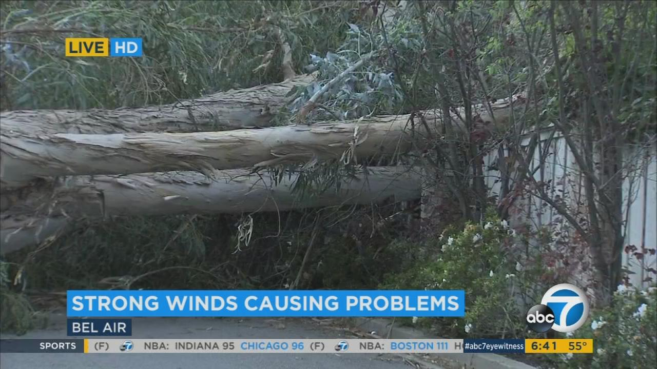 Fierce winds whipped across the Southland overnight, toppling over a giant tree and knocking out power for many residents in Bel Air and other parts of the Southland.