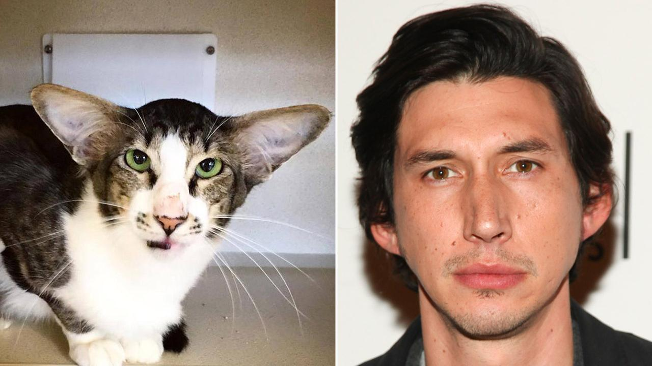 Kitty Driver and Star Wars star Adam Driver are shown alongside one another.