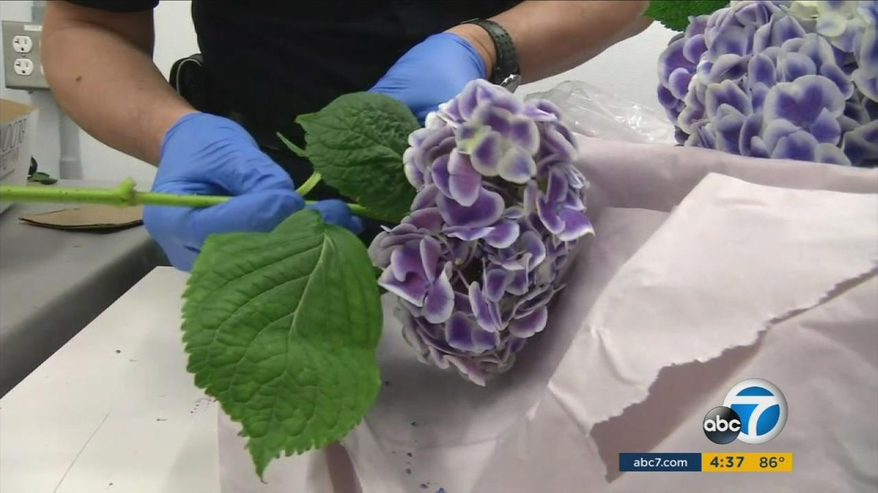 Flowers are inspected at LAX before they are imported for Valentines Day.