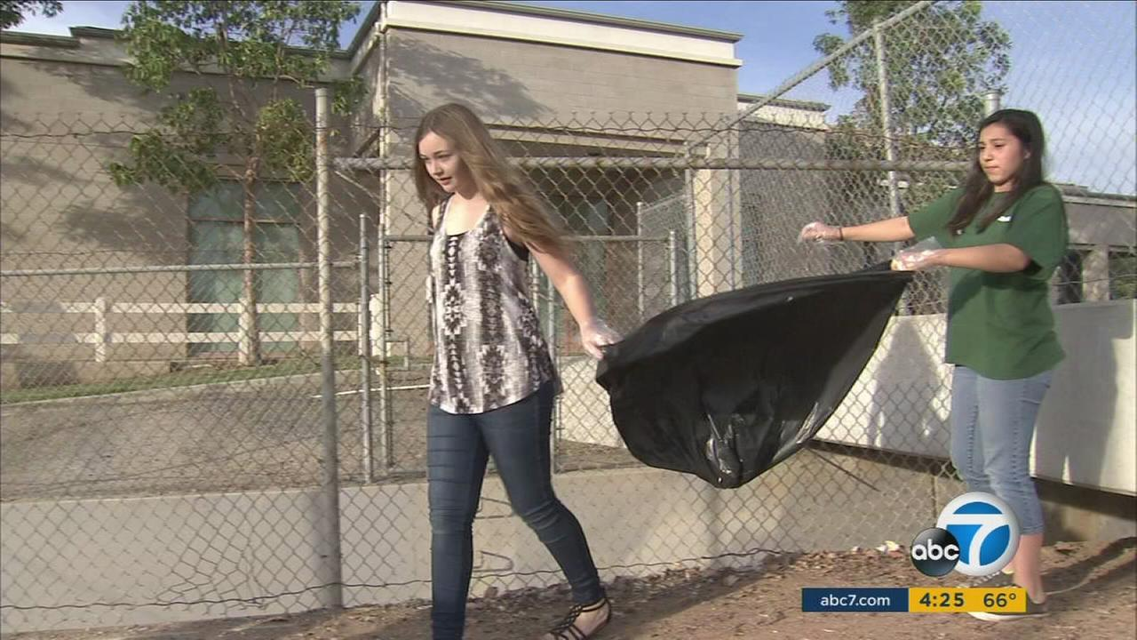Our ABC7 Cool Kid for Thursday, March 3, is Krystal Negri, who volunteers to plan activities for kids and seniors and devotes time to keeping her communitys parks clean.