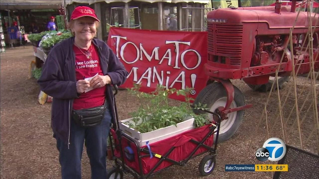 Jan Thompson of Mid-Wilshire poses next to her cart full of tomato seedlings at the Tomatomania event in Encino on Friday, March 18, 2016.