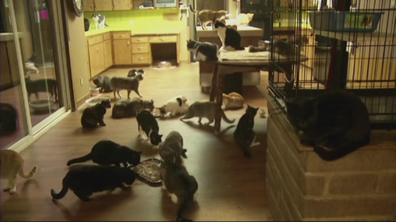 A California woman has transformed her 4,000-square-foot home into whats believed to be the largest no-cage cat sanctuary and adoption center in the U.S.