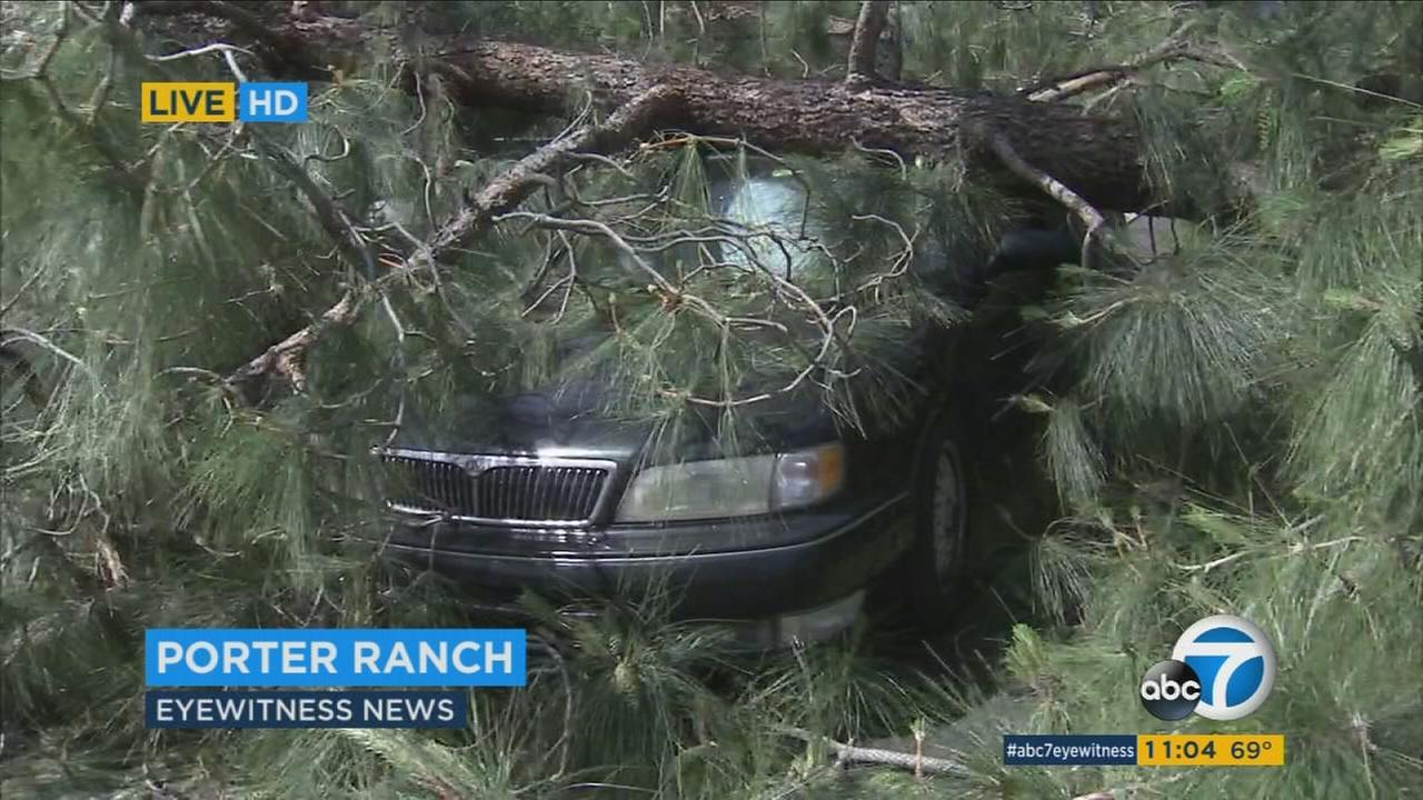 A car is left damaged under a tree after strong winds uprooted it in Porter Ranch on Friday, April 15, 2016.