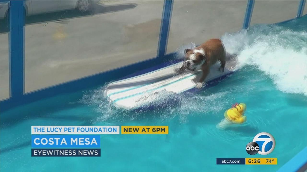 Some doggone cute surfers took to the waves at the Orange County fairgrounds to compete for a spot on a 2017 Rose Parade float.
