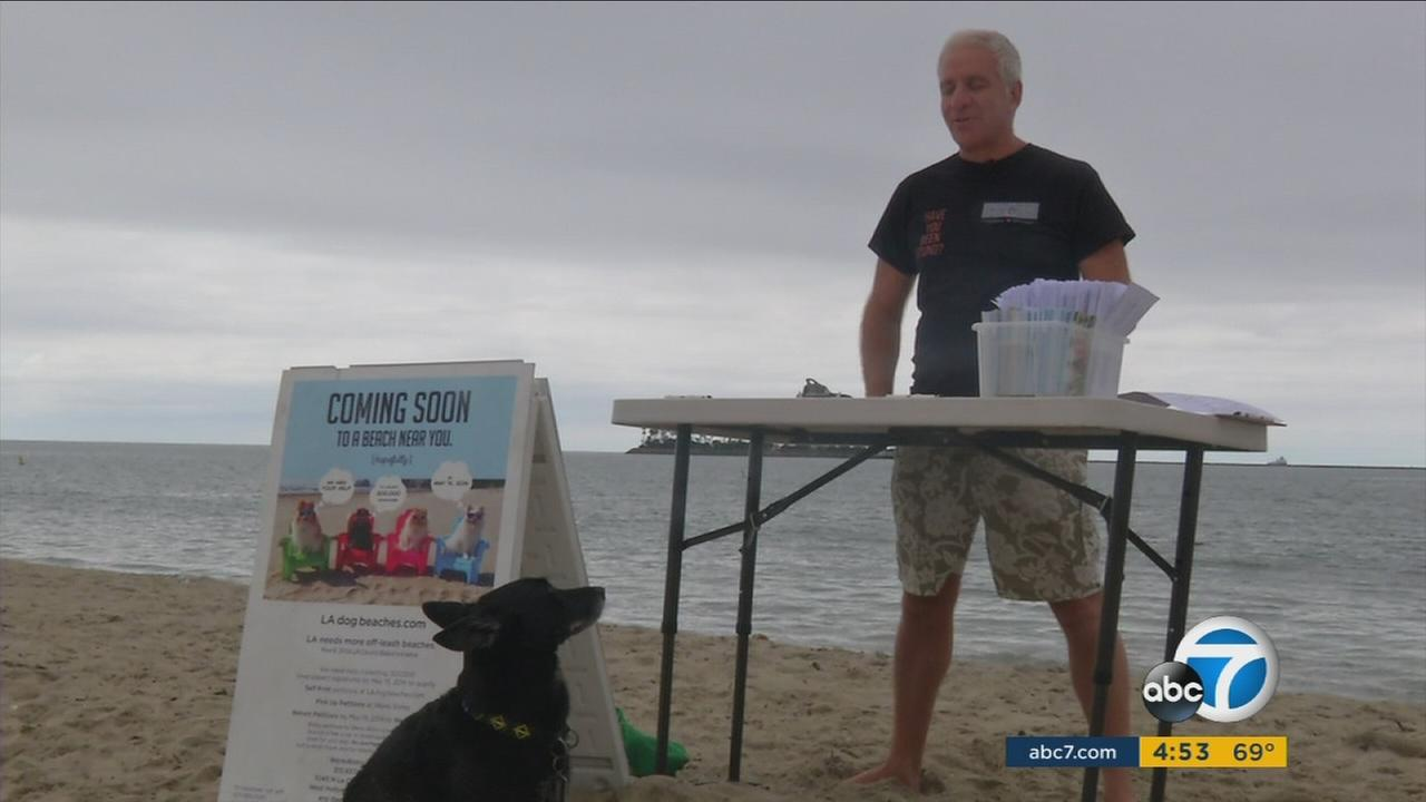Proponents are gathering signatures for a ballot measure to add more dog beaches in Los Angeles.