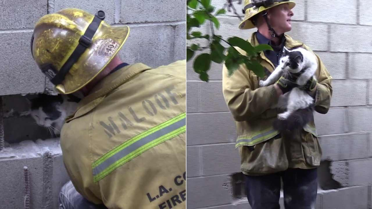 A firefighter is seen saving a kitten that wedged itself in a cinder block wall in Temple City.