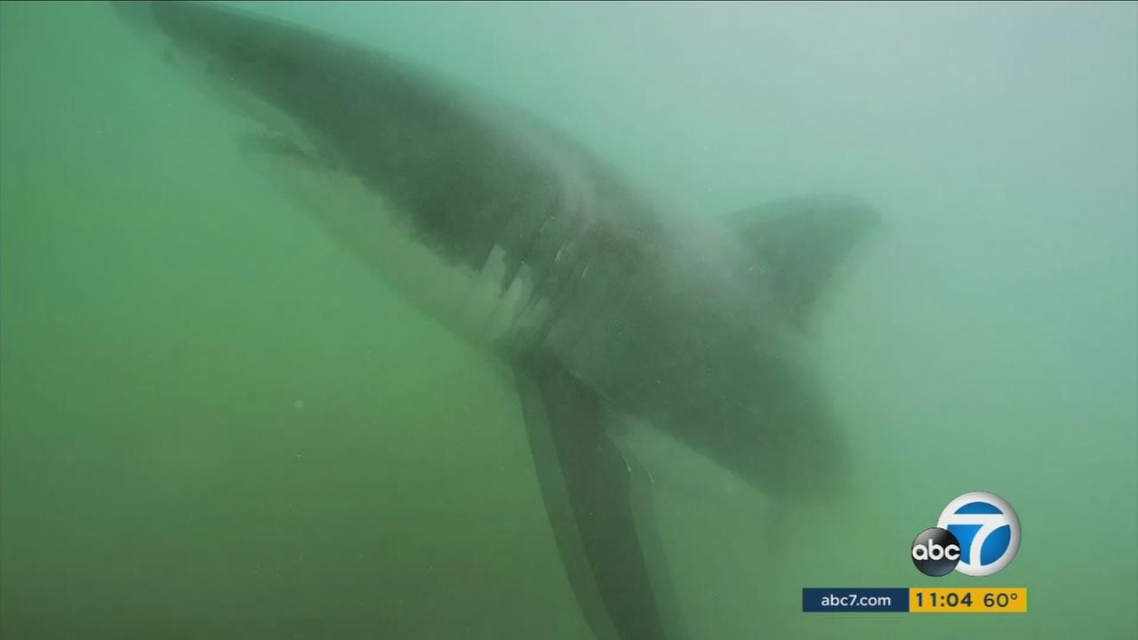 A section of Huntington Beach was closed Sunday afternoon after officials spotted two or three large sharks in the water.