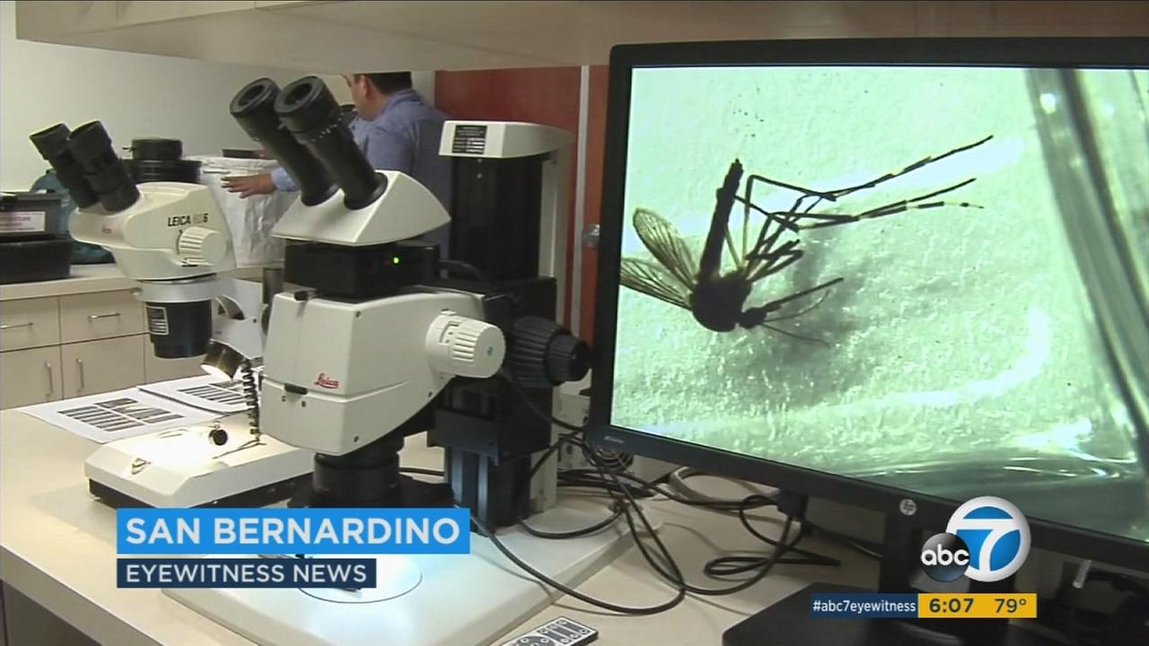 The San Bernardino County Mosquito and Vector Control are monitoring mosquitoes to protect people against diseases like the Zika virus.
