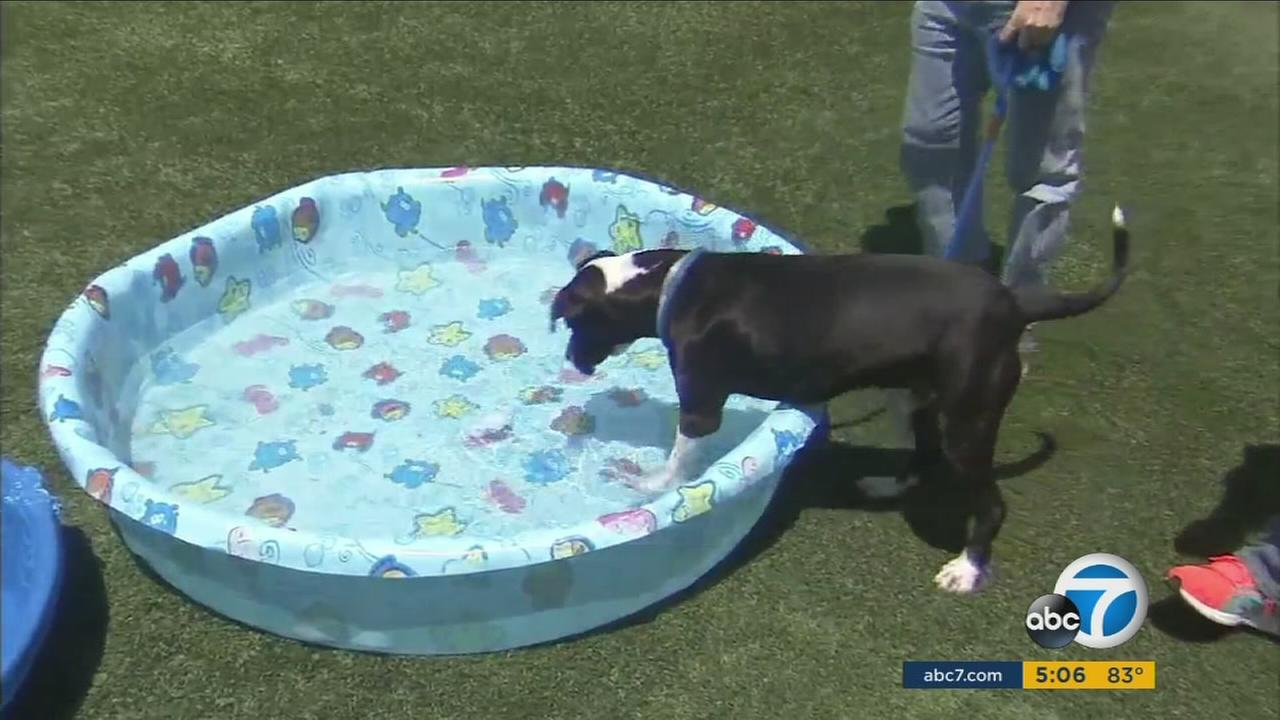 As temperatures hit dangerous levels this weekend, Southern Californians are being advised to take special precautions to keep themselves and their pets cool.