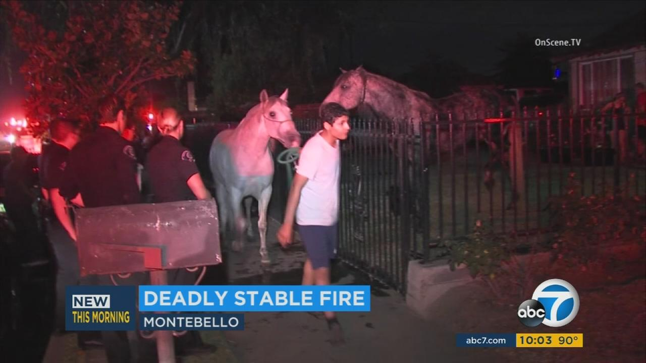 Horses seen escorted out of a scorched stable after a fire killed at least 10 horses in Montebello on Sunday, June 19, 2016.